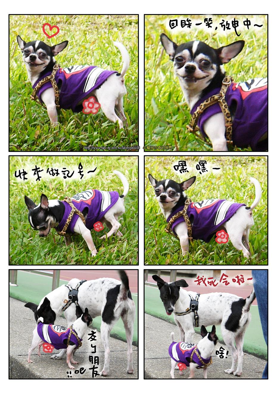 201012dog_5.jpg